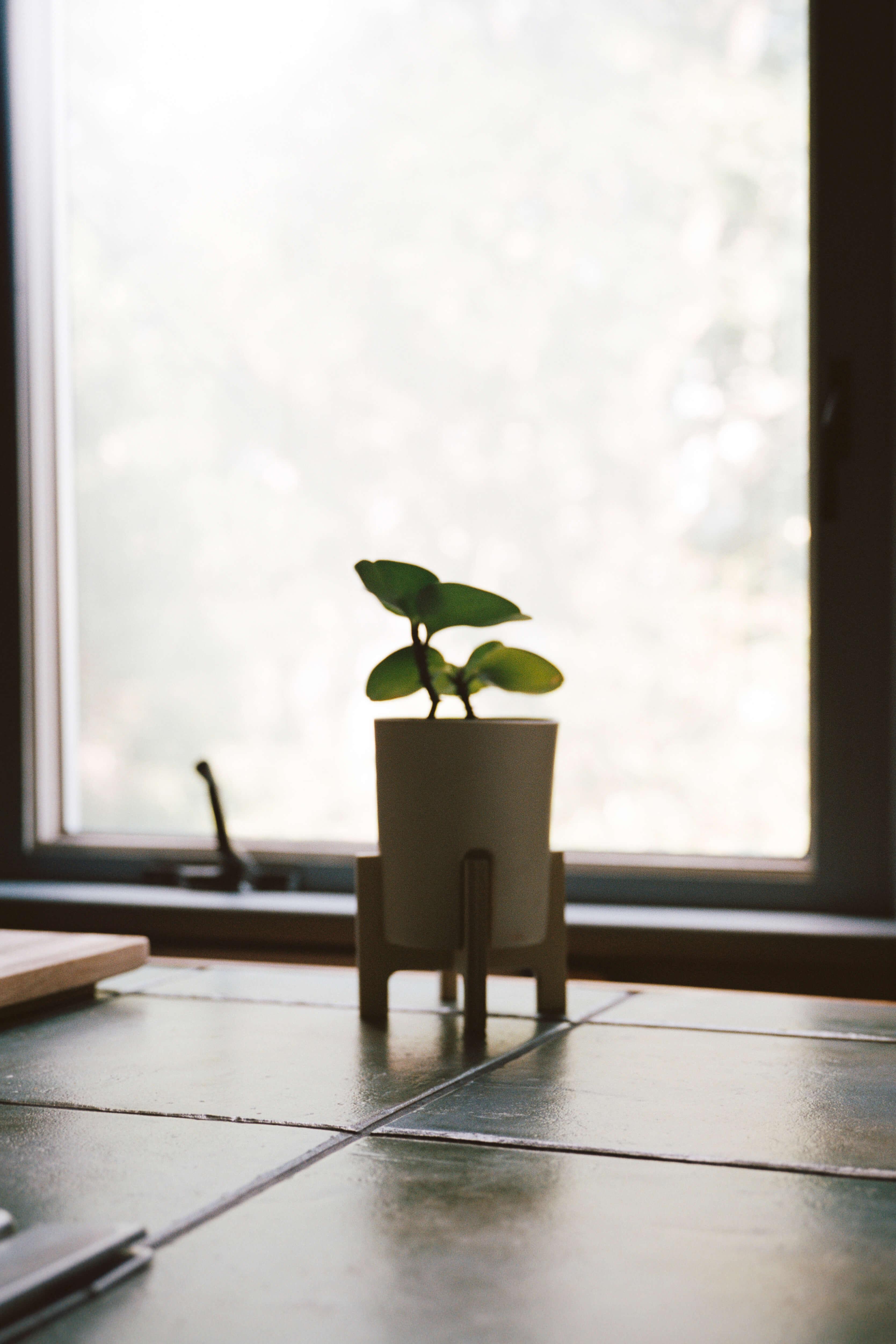 Plant007